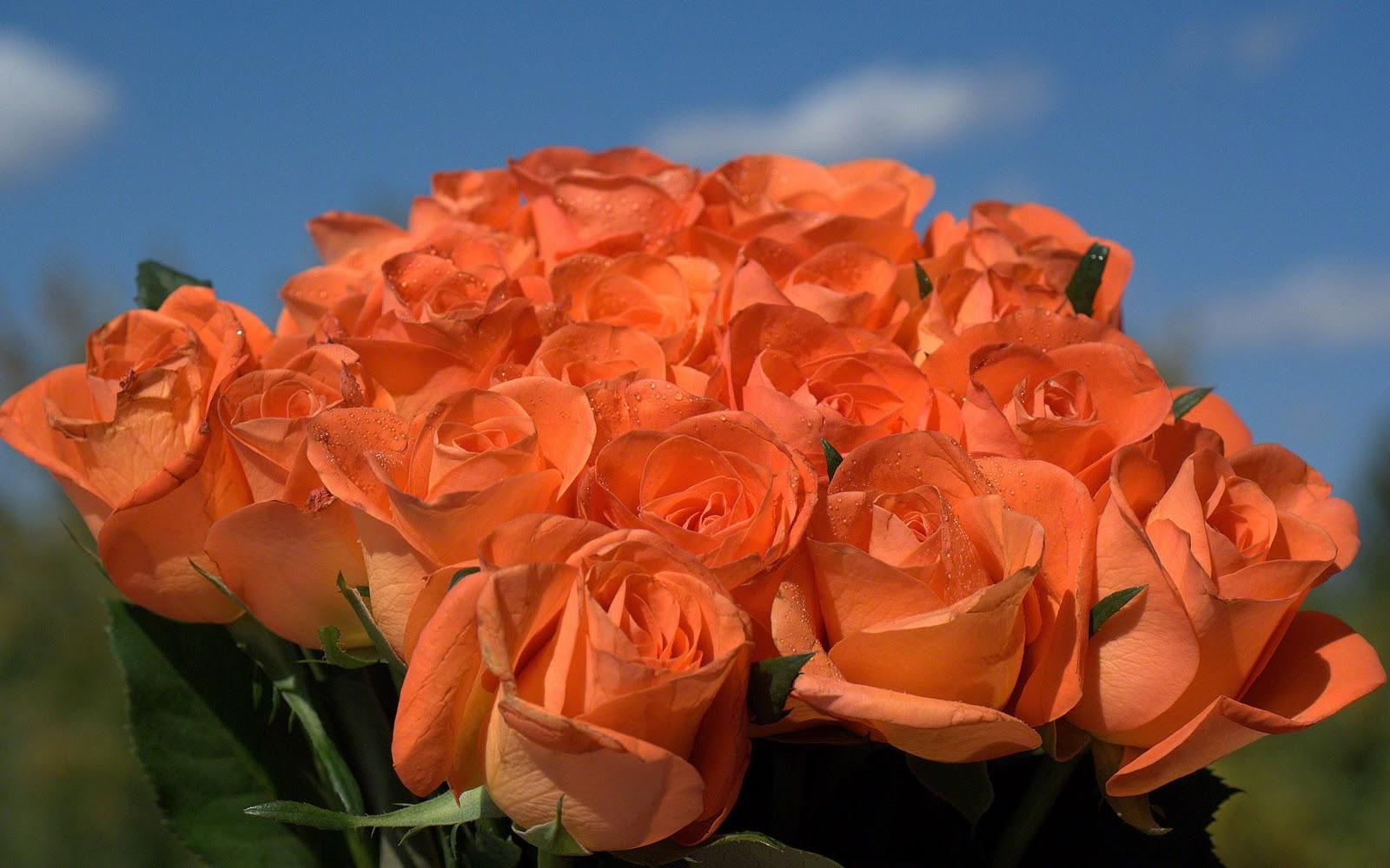 http://4.bp.blogspot.com/-OwglNa5JfgE/TZM6jGXmILI/AAAAAAAAAFY/5A_JMMeqfS4/s1600/roses-photo-wallpaper-02517.jpg
