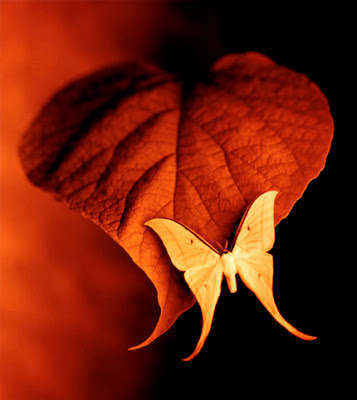 amazing_wallpapers_fly_art