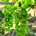 Vineyard Hopping - Monticchio Bagni (Pz) - Tenuta I Gelsi