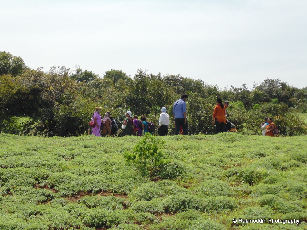 Kas Pathar - Flowers valley in Maharashtra