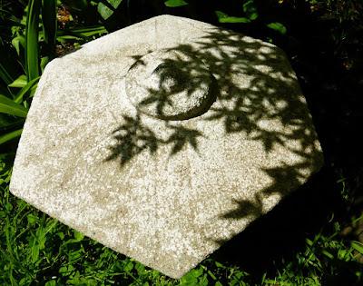 Back Yard, Natural Garden, Eugene, Oregon, Summer