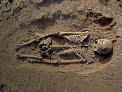 Evidence of a prehistoric massacre in Kenya extends the history of warfare