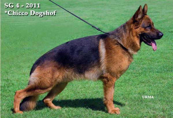 Jarman Safed Dog Photos For Sale