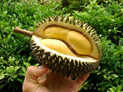 [imagetag] http://4.bp.blogspot.com/-OxtFnrLqJMo/Tw6XgmCXTjI/AAAAAAAAFEk/VBmJ0BoU1-E/s1600/durian+sedap.jpg