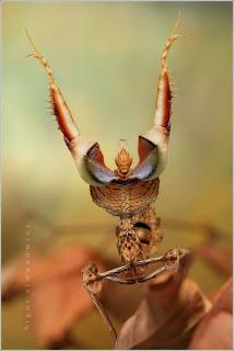 foto serangga jarak dekat sekali