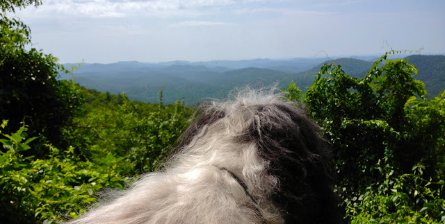 Cosmo Havanese views Smoky Mountains