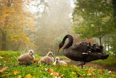 fotografías gratis de animales en su hábitat natural