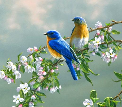 Invito - Primavera uccelli primavera colorazione pagine ...