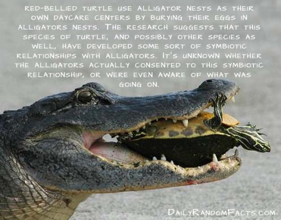 animal facts, facts about animals, interesting animal facts, turtles fact