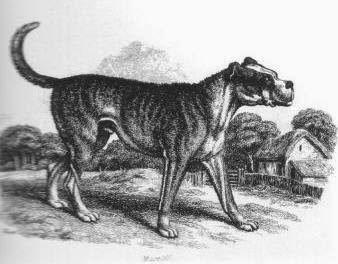 Los Perros en la Historia