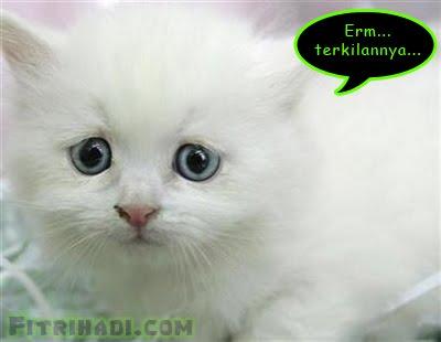 kucing comel kejam