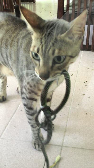 Living In Singapore Singapore Snake Again
