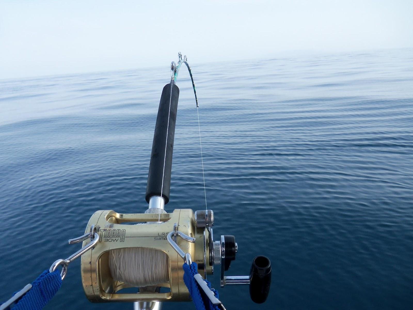 Fishing sayulita june 2012 for Fishing for tuna
