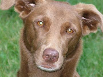 Neighborhood dog missing