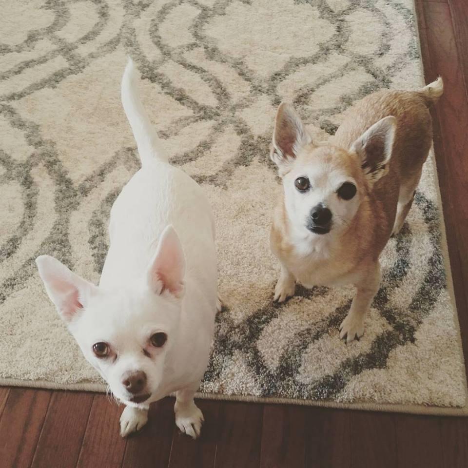 Our furbabies, Oopsie & Peanut