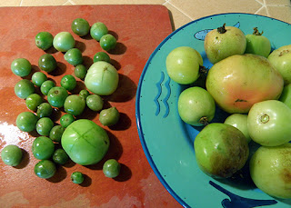 Green Tomatoes Being Prepared for Blanching