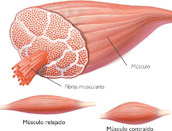 Dibujos de tipos de células
