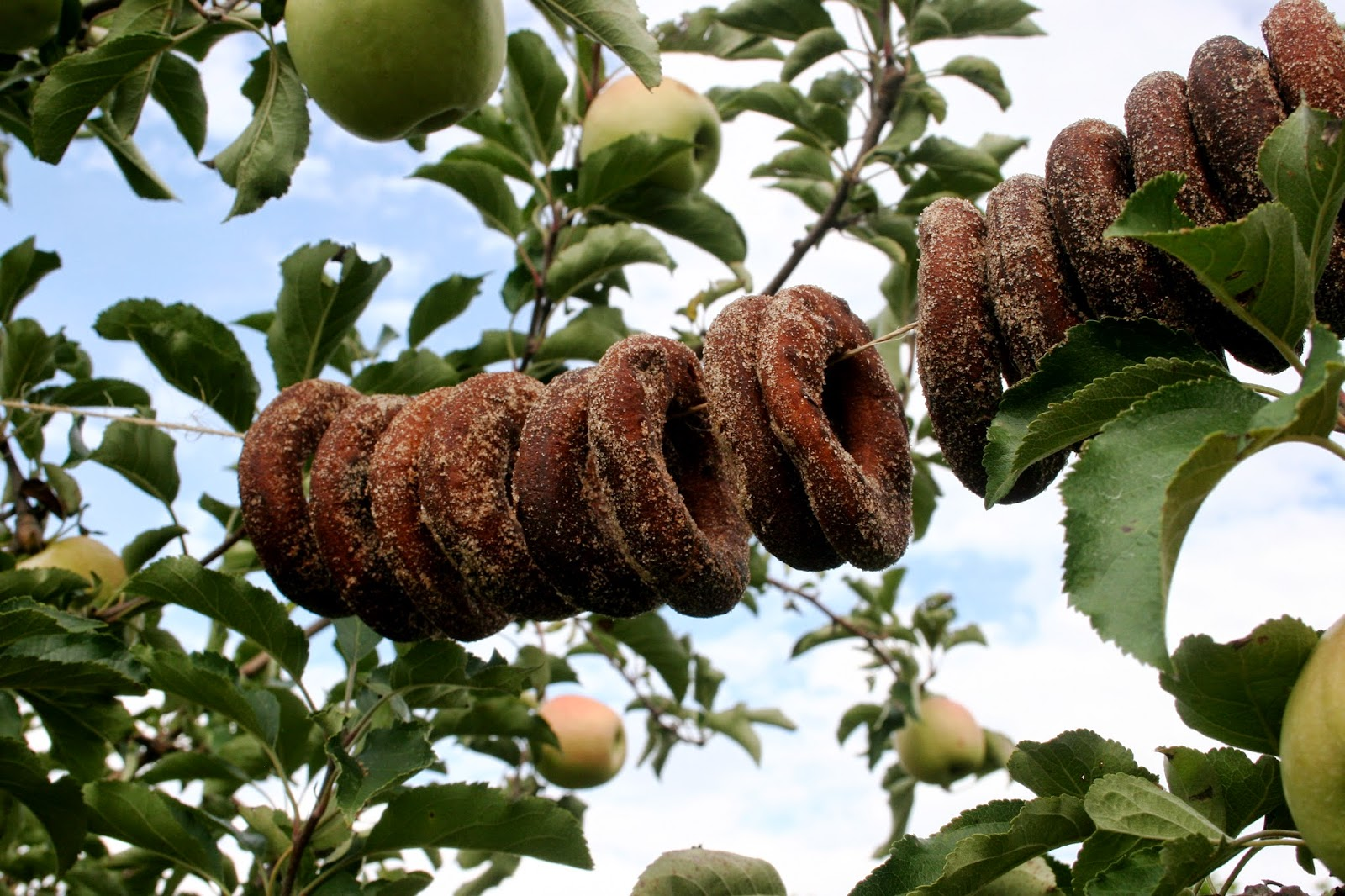 Apple Cider Doughnuts on a string