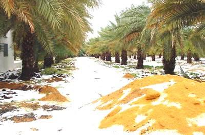 Jazirah Arab Kelak akan jadi Padang Rumput nan Subur, Ini Penjelasannya