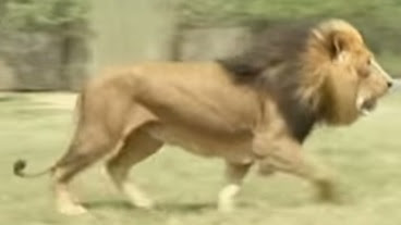 leon-devora-mujer