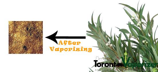 Vaporizing Eucalyptus