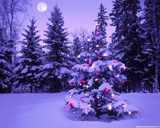 Xmas Tree adorned with lights night view