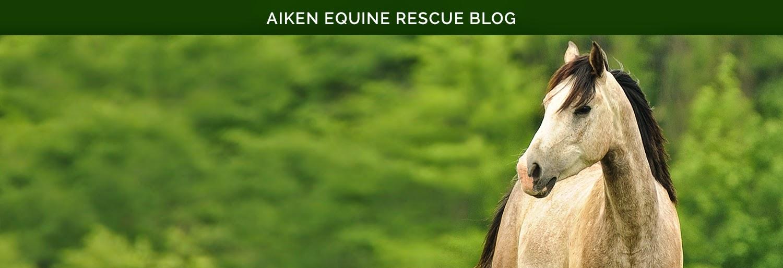 Aiken Equine Rescue