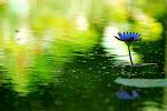 Meditación Reconectiva