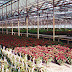 Design Criteria for a Modern Commercial Greenhouse Facility-2