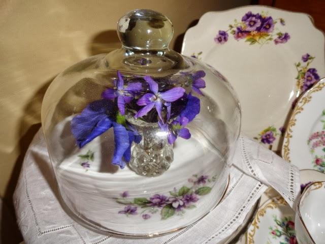 Violets under glass