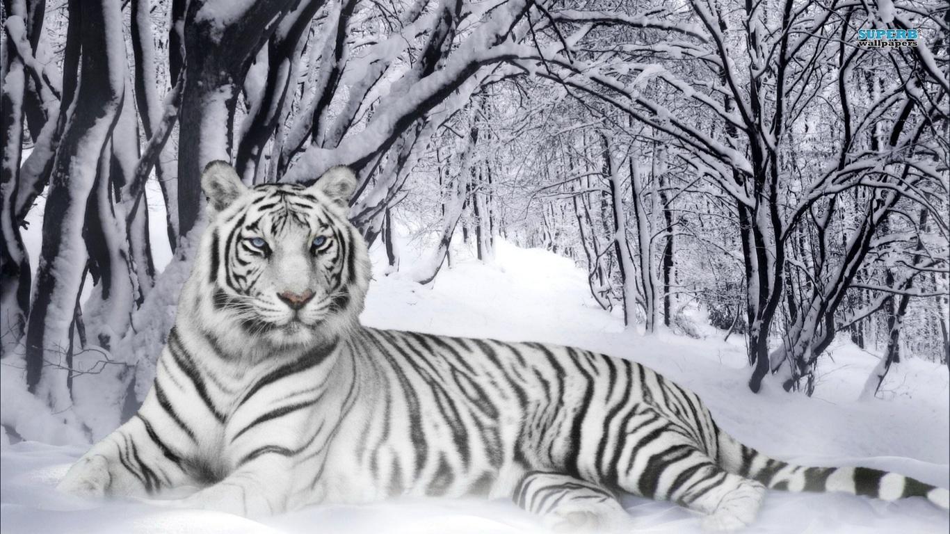 http://4.bp.blogspot.com/-P3puyLDdBPY/UBVVg7nOZ6I/AAAAAAAAAIk/CIGVZecx0vM/s1600/Harimau+Putih+2.jpg