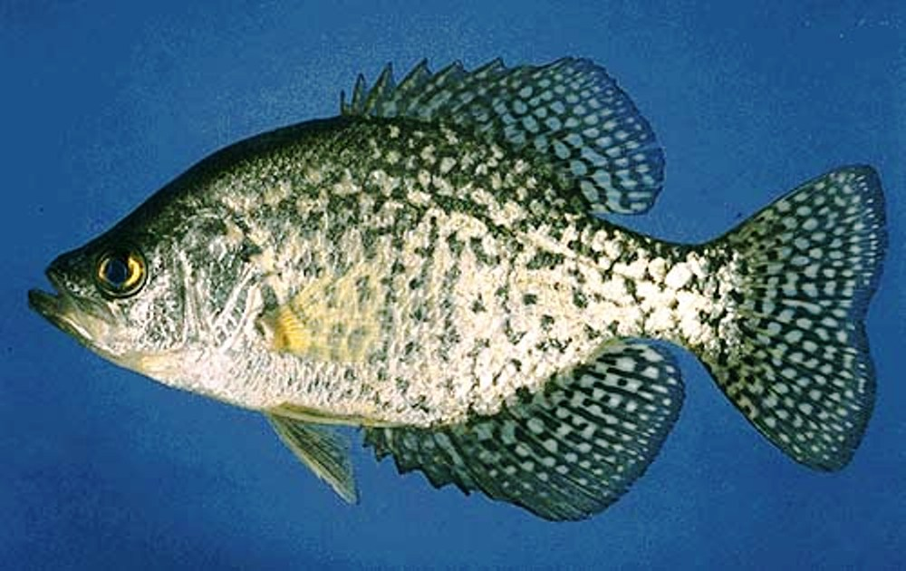 Civilian campgrounds rv parks july 2012 for Crappie fishing in alabama