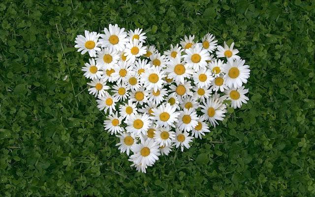 Foto met een bloem in de vorm van een liefdes hartje