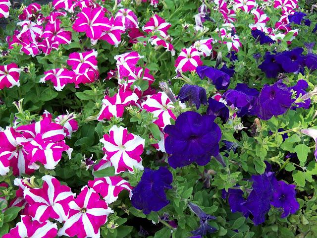Flowers Ternopil Ukraine