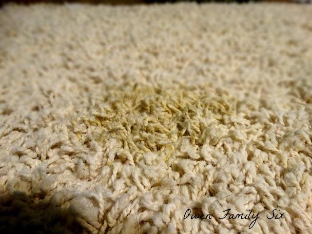 Owen Family Six: Carpet Cleaner