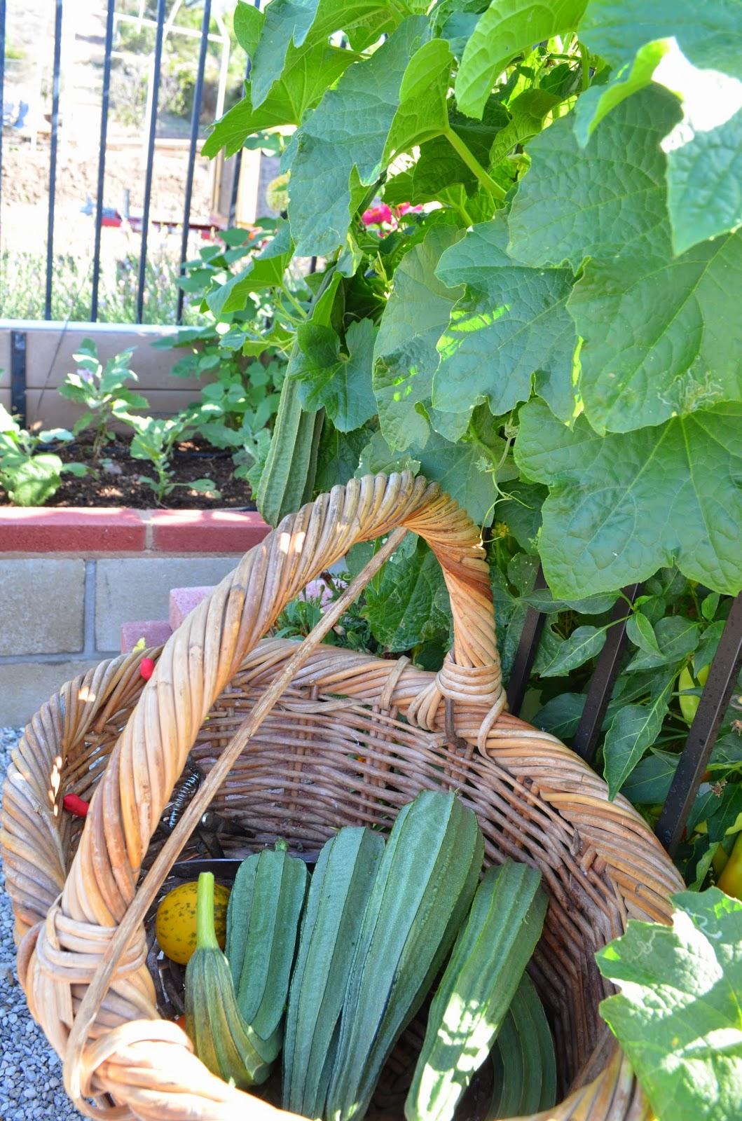 Kitchen Garden Produce Entertaining From An Ethnic Indian Kitchen Kitchen Garden Update