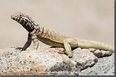 Desert Animals Picture