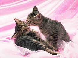 cat kiss photo