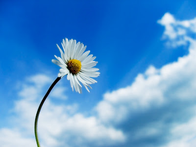 Nice flower wallpaper. Single flower is focused in front of sky. Sky is blue and the clouds are amazingly situated at the bottom right of the image. Really nice flower wallpaper.