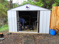 Open door of goat barn