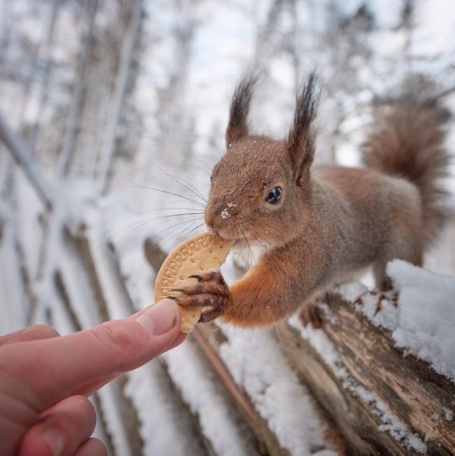 wildlife photography feeding animals konsta  punkka-13