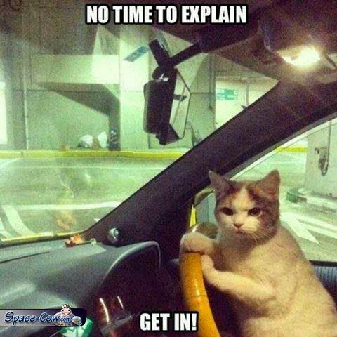 funny animals cat pics