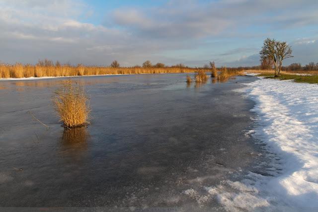 Bevroren vaart - Frozen canal @ Oostvaardersplassen