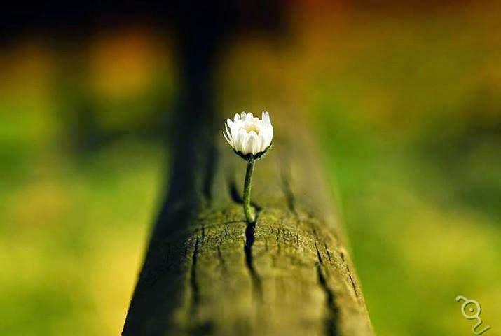 amore, benessere, cambiamento, crescita interiore, crescita personale, crescita spirituale, di successo, essere felici, felici, il successo, la crescita, la felicità, ricerca della felicità, vivere felici,