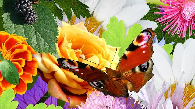Hình ảnh hoa đẹp 18