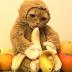 Gato disfrazado de mono causa polémica en Youtube