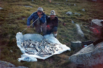 información pesca
