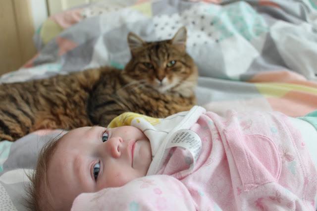 cat watching over baby
