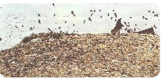 Las zonas destinadas a contener los residuos sólidos están llegando al límite de su capacidad, como en la ciudad de México, donde se generan entre 12 y 18 mil toneladas de basura diarias.