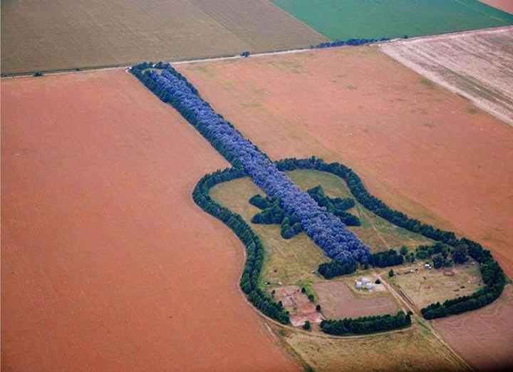 arboleda con los contornos de una guitarra